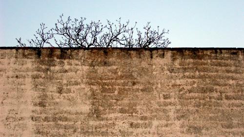 muro-de-casa-1